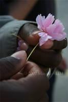 Sweet Sakura by key-stone
