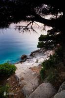 Pine Tree Promenade by Pr3t3nd3r