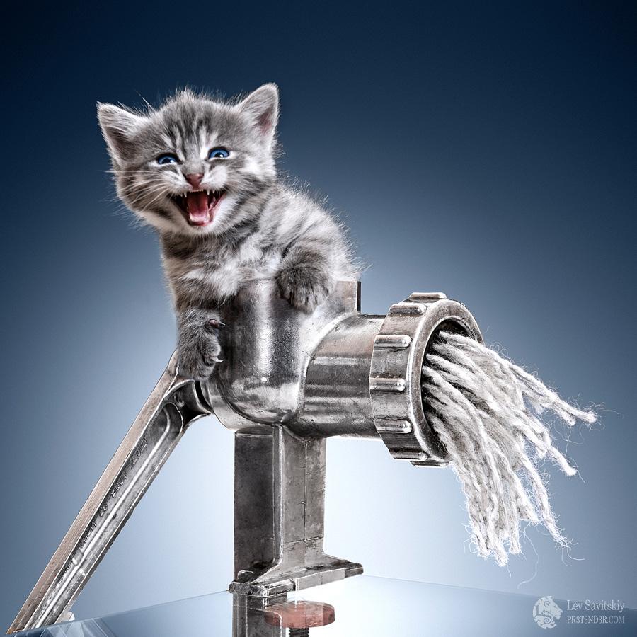 Minser: Kitten by Pr3t3nd3r