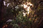 sun and flowers II