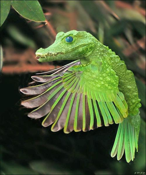 birdidile by imamon