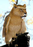 liowl