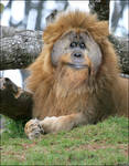 lionatang