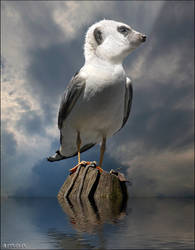 meergull
