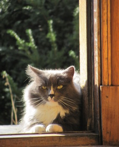 HekaKhepera's Profile Picture