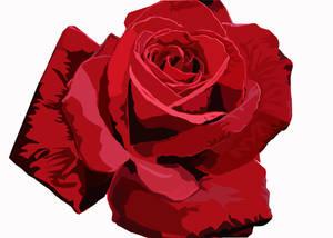 Rose vexel