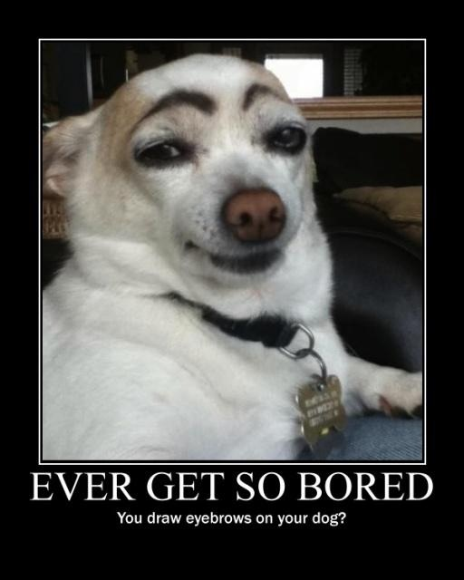 Doggie eyebrows funny pic by xChocolateThunderXx on