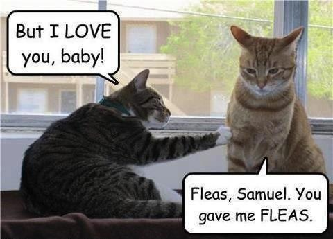 fleas_samuel___funny_pic_by_xchocolate_t