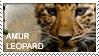 Amur leopard Stamp by AllerleiArt