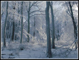 winter forest by balazska