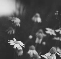 -forgotten- by dreamisdestiny1