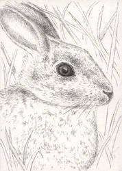 Rabbit sketch ACEO