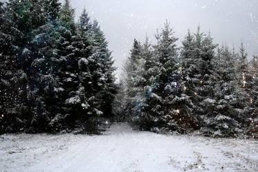 Glittery Woods