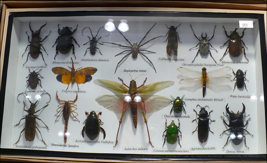 insect essay The major systems in insects are the circulatory, respiratory, nervous, muscular, digestive, and reproductive systems in the circulatory system, blood is pumped by the heart in a tube to the aorta.