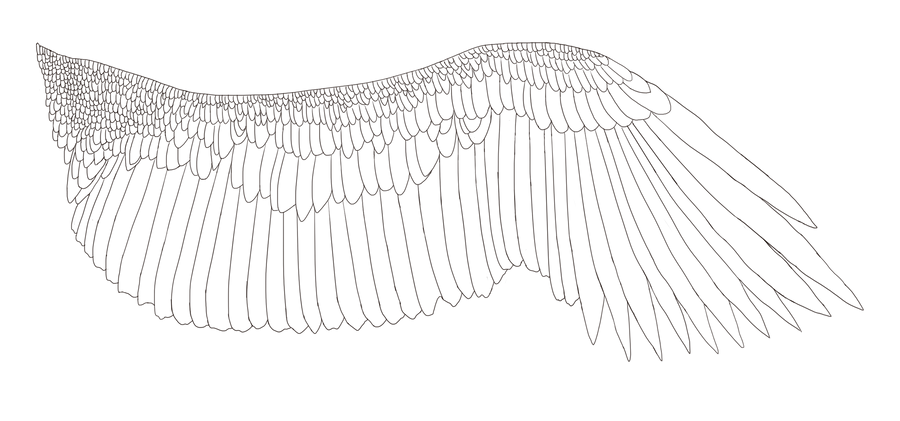 Line Drawing Wings : Free eagle wing lineart by aerophoinix on deviantart