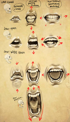 Expressions- Mouth + Jaw