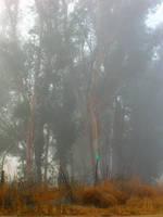 A Foggy Day by cehannan