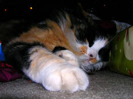 Christmas Kitty--Paws Out by cehannan