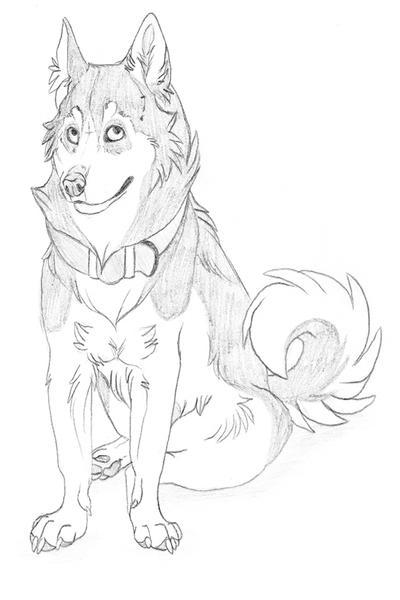 Husky Sketch By Nathalienova On Deviantart