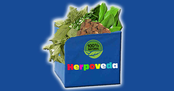 Herpoveda 1234 by naturalherpescure