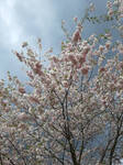 Blooming Blossoms 49