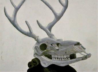 skull still life by Carolyn-Mae