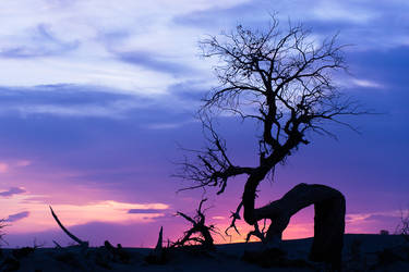 Tree by MisakiRion