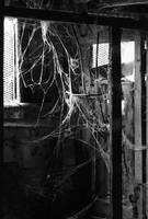 Webs by greystarlight