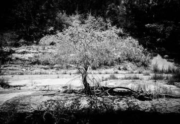 Mesquite, Blanco by greystarlight
