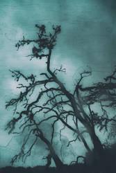 Rain Falls Cold on a Dark Night by greystarlight