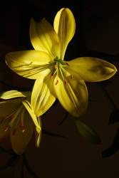 Yellowy Lillies by mr-macd