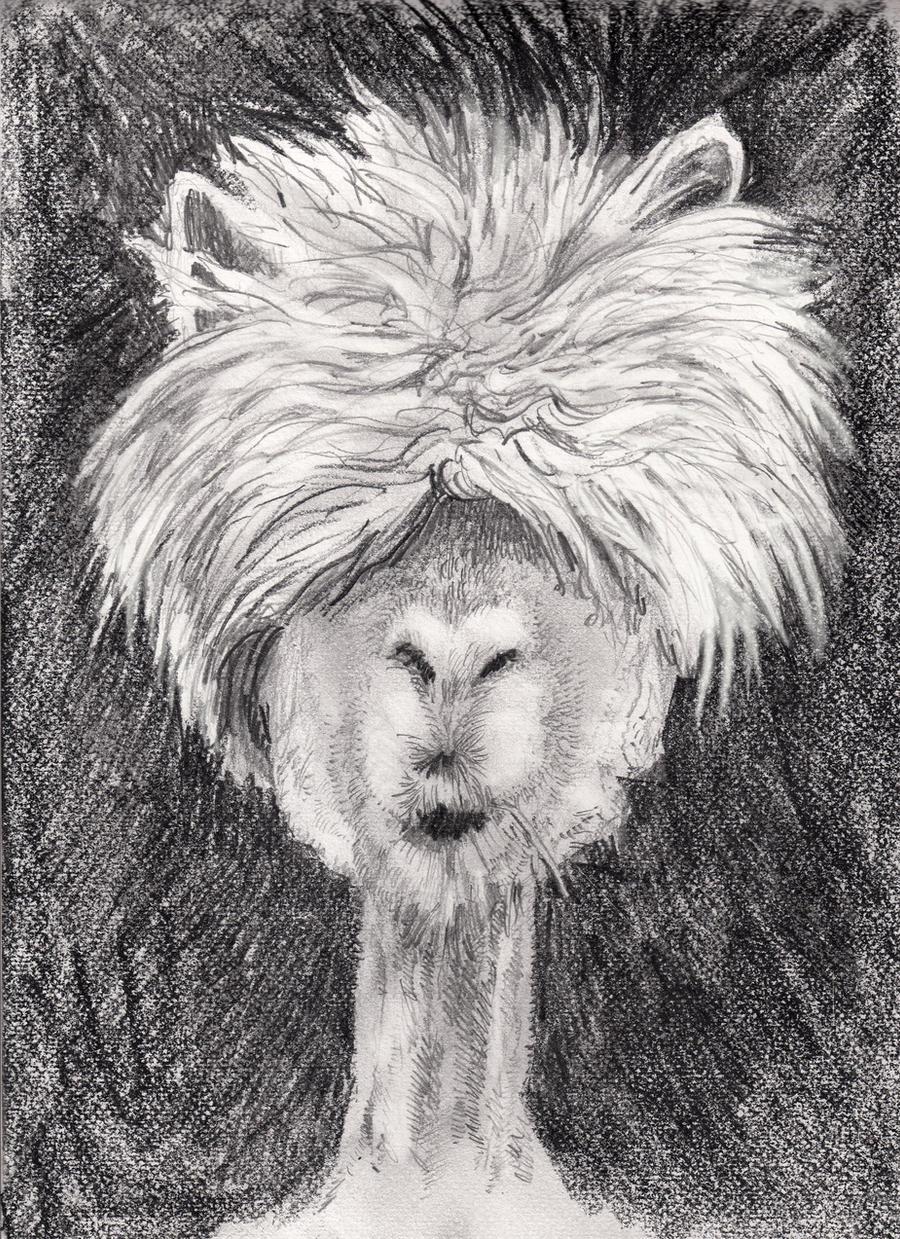 No it is NOT a Llama it is  another Alpaca.