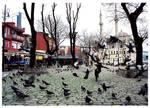 Ortakoy pigeons