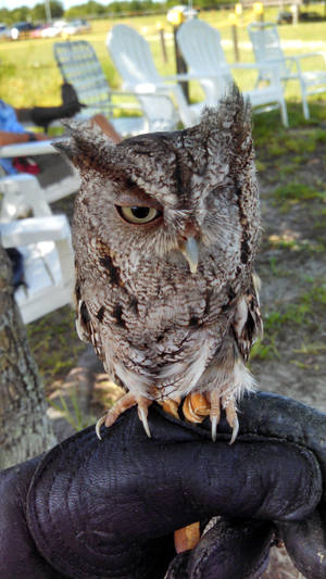 Holding Hunter the Screech Owl by ShakeablePanda