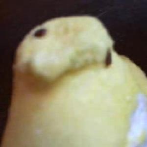ChimeraReiax's Profile Picture