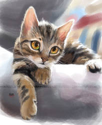 speedpaint-cat by moyan
