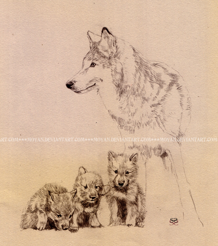 Mom and 3 pups- sketch by moyan