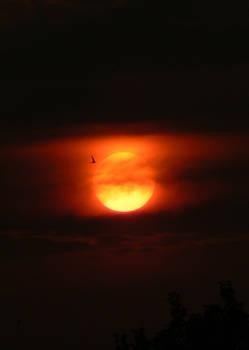 Flying Towards The Sun IV