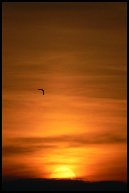 Flying Towards The Sun VI by estachos