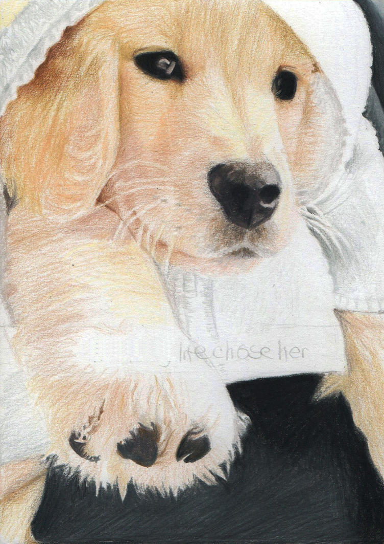 Josie! Pet portrait by Pencilsketches