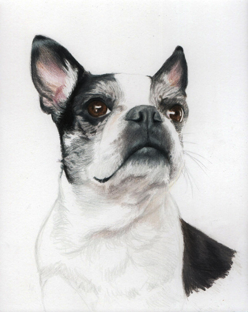 Jean! Pet portrait by Pencilsketches