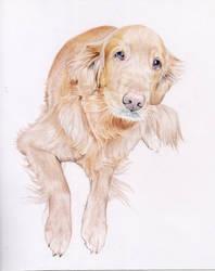 Sandles - Colored pencil portrait
