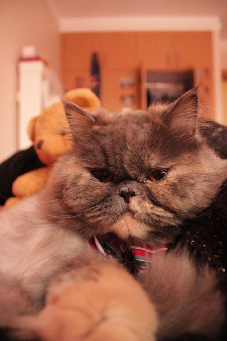 my midget cat by ssss8888 on deviantart