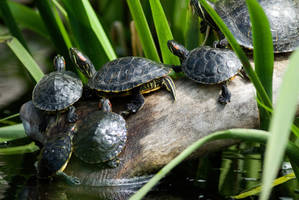 Turtles 2 by Art-Photo