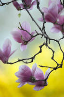 Spring Blossom 4 by Art-Photo