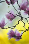 Spring Blossom 4