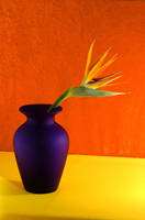 Birds of Paradise+Blue Vase by Art-Photo
