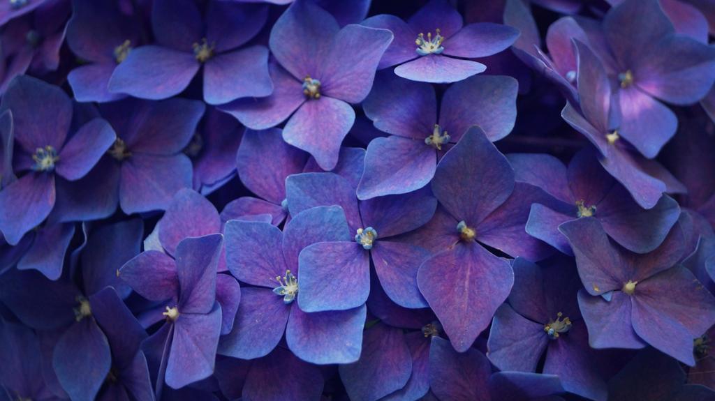 Feeling blue by MrsMichaelis
