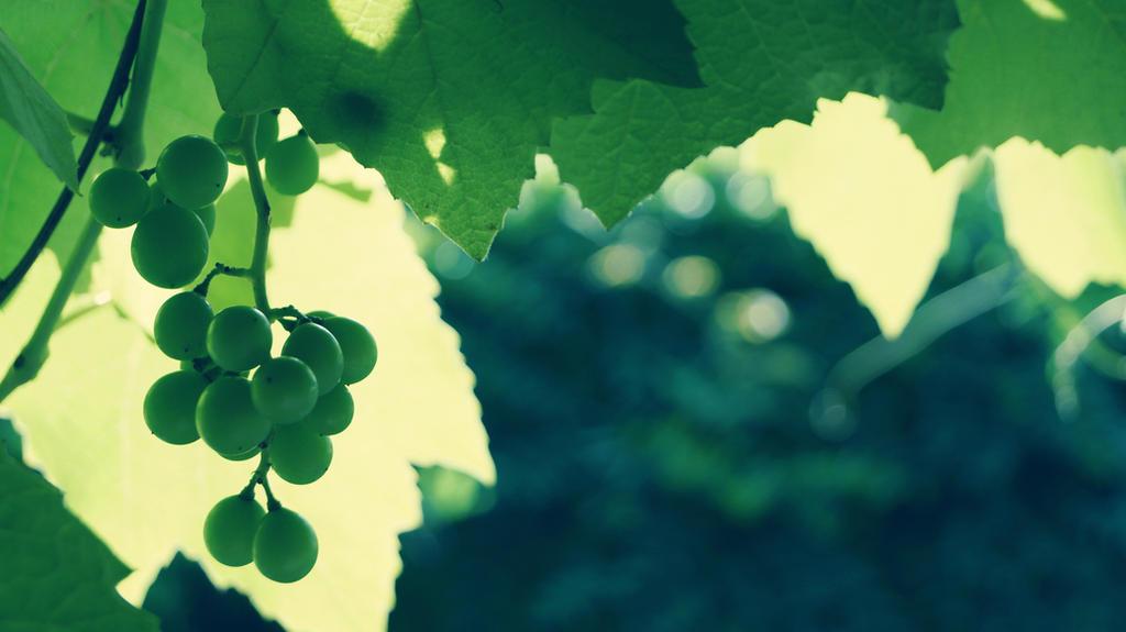 Grapes by MrsMichaelis