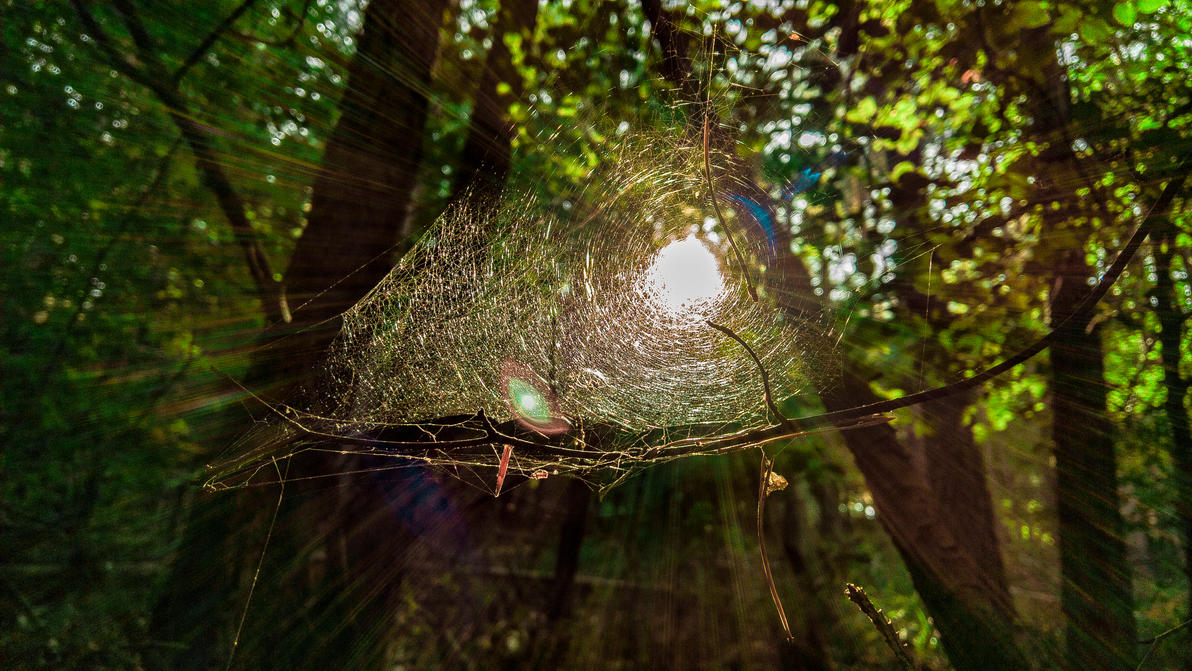 Cobweb by luzudemcas